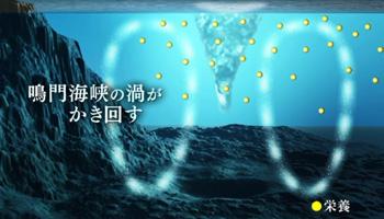 3.豊富なプランクトン(画像)