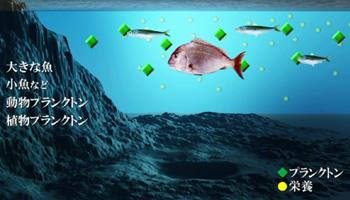 4.海を育む渦潮(画像)