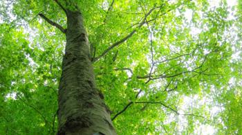 自然(画像)